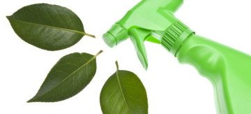 green spray bottle and leaves