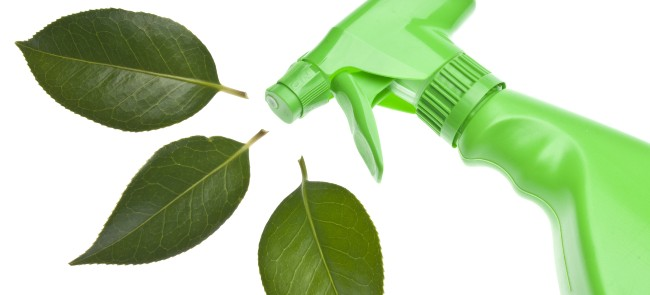 green spray bottle and green leaves