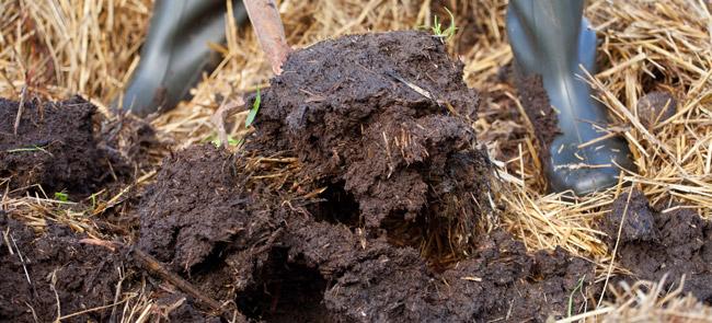 manure mulch