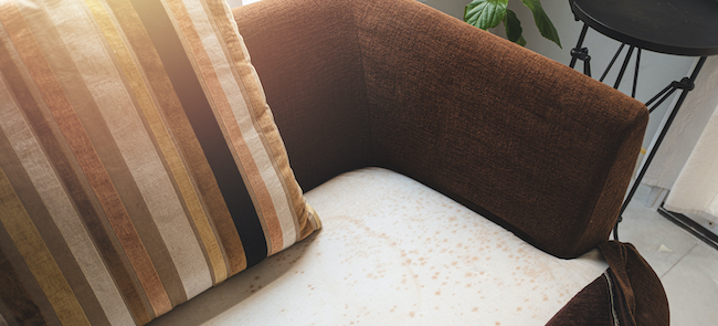 removing mould from upholstery on the old sofa