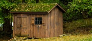 Green roof on a shed