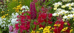 cottage garden flower bed