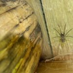 spider in shed