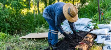 no-dig gardening guide