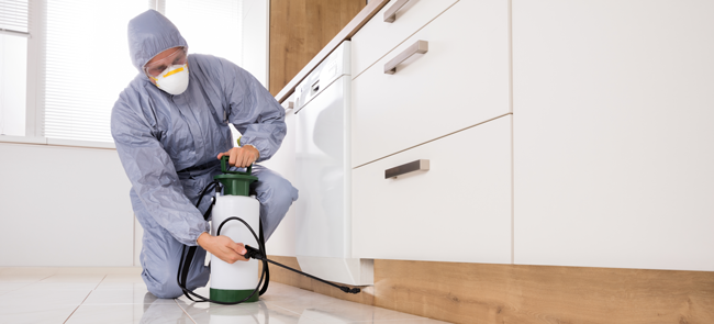 How much does pest control cost UK